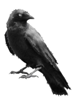 Dirty Crow Graphic