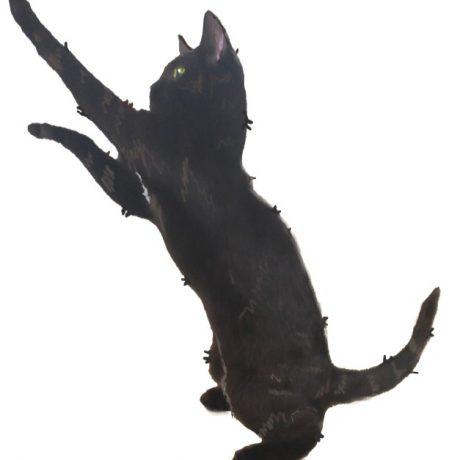 Little Black Cat Graphic